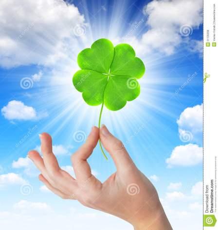 main-tenant-un-trèfle-vert-de-quatre-feuilles-51135208